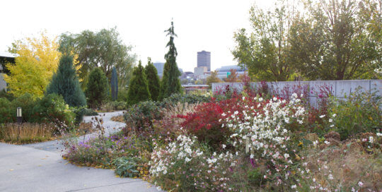 Crisp whites and vibrant reds dominate this end of the Koehn Garden. Photo by Kelly Norris.