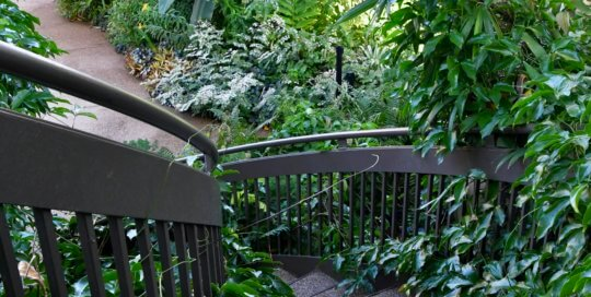 Layers of lush, vibrant greenery capture attention during a walk down the conservatory staircase.