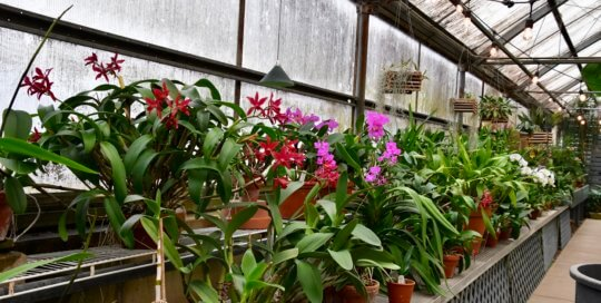 Assorted container plants provide a colorful entrance to the Gardeners Show House.