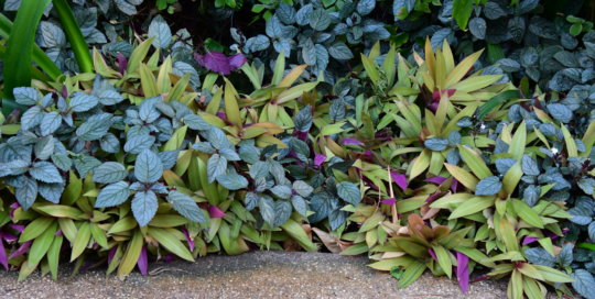 Foliage in all shapes, sizes and colors line the pathways in the conservatory.