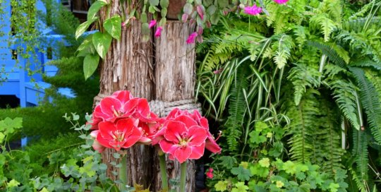 The Gardeners Show House thrives in crisp reds, pinks and greens this month.