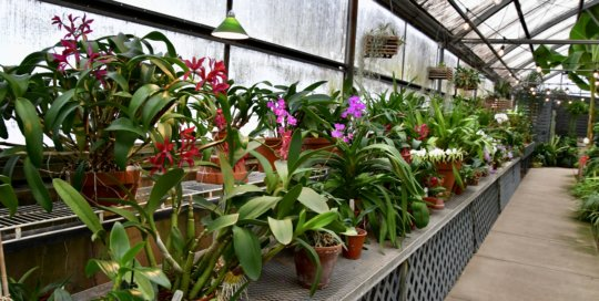 A wide variety of orchids line the entry to the Gardeners Show House.