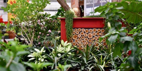 """A cozy """"fireplace"""" setup marks the holiday season among countless container plants."""