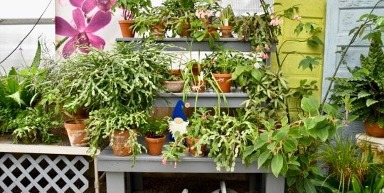A varied collection of plants soak in the sunlight in the Gardeners Show House.