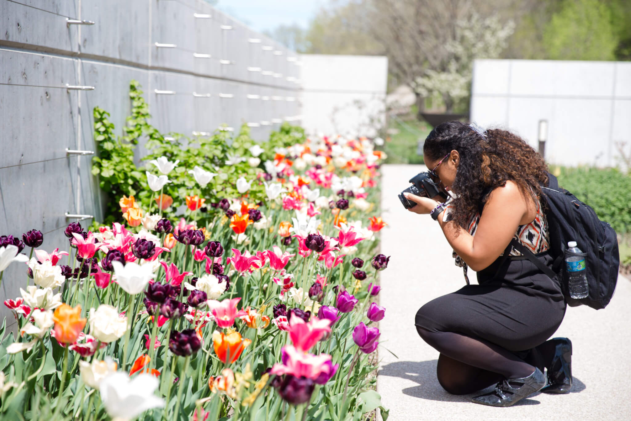 Person stooped low to the ground while taking a photo of tulips.