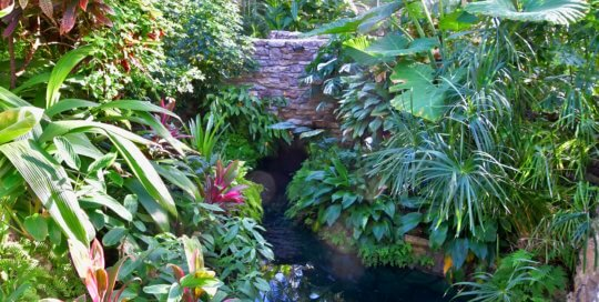 Tropical plants and pond with stone bridge.